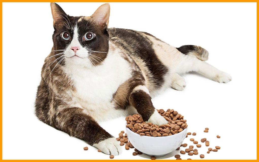 Hrana za mačke: hrana za mačke vs. pseća hrana?
