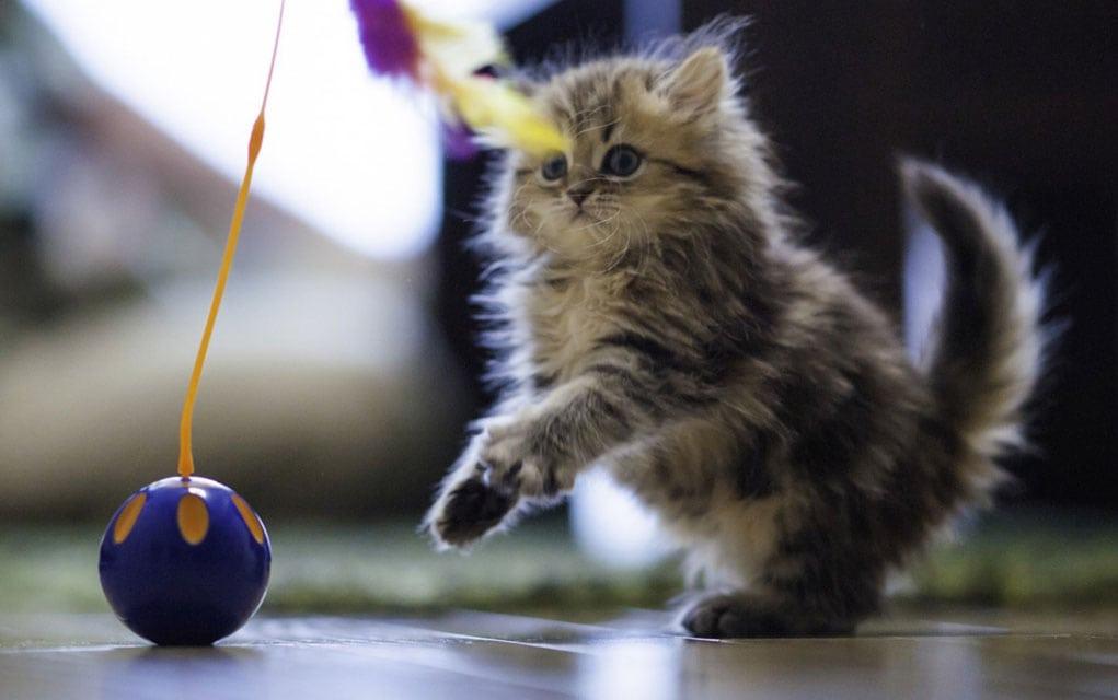Igre mačaka: Kako da osmislite igre mačaka?
