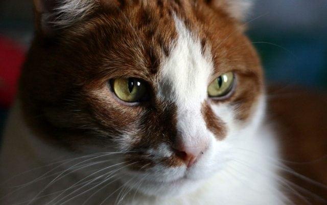 ishrana mačaka u godinama