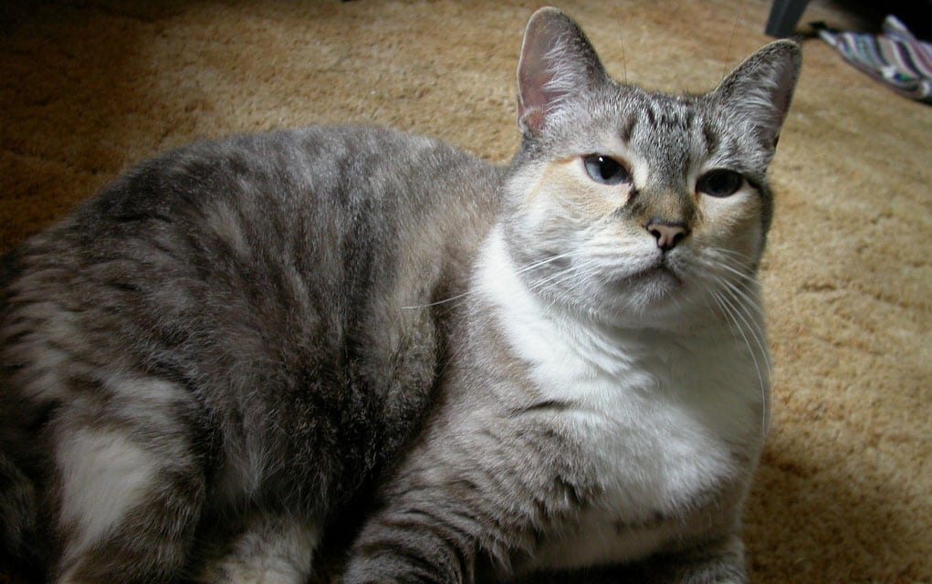 """Ishrana mačaka koje su u """"godinama"""" - sve što niste znali!"""