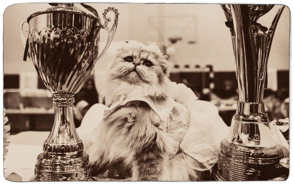 Izložba mačaka: Kada i zašto je organizovana prva izložba mačaka?