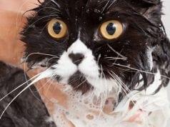 kupanje macaka petface