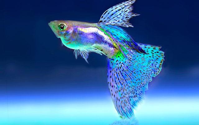 akvarijumske ribe