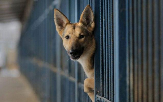azili za pse petface