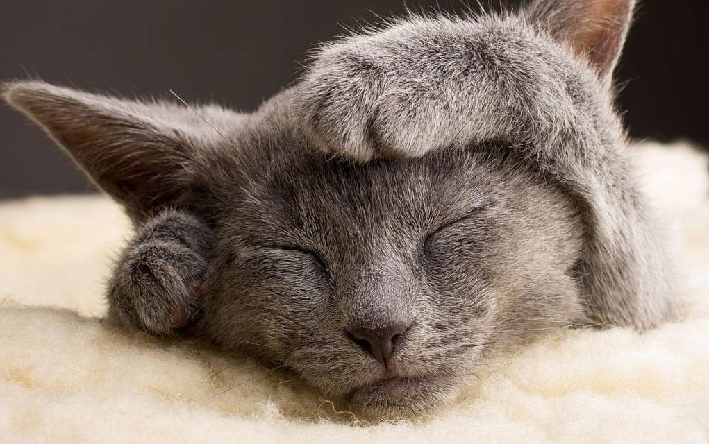Ishrana bolesnih mačaka