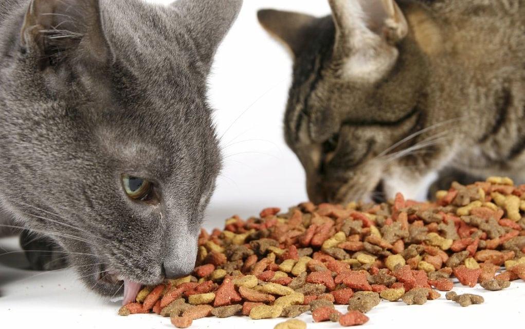 Ishrana kućnih mačaka