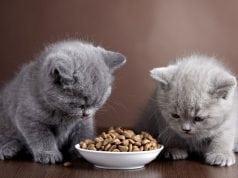 ishrana macica petface
