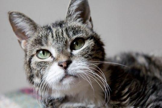 ishrana stare mačke petface