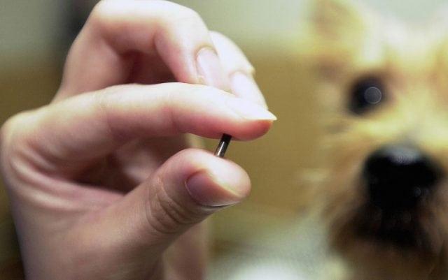 mikročipovanje pasa petface