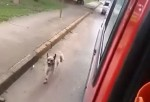 NAJBOLJI PRIJATELJ JE UVEK TU: Pas trčao za kolima hitne pomoći, koja su vozila njegovog vlasnika u bolnicu!
