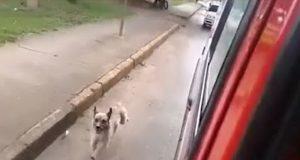 pas-trci-za-hitnom-pomoci-petface