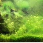 Čišćenje algi u akvarijumu