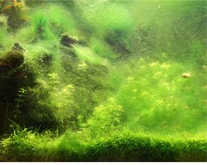 petopedija-alge-3