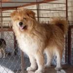 Azil za životinje = njihova bezbednost?