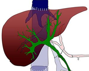 petopedija-bolesti-jetre-2