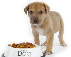 petopedija-hrana-za-pse