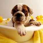 Kupanje pasa: Kako da kupanje pasa ne bude bauk?