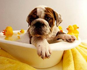 petopedija-kupanje-pasa-3