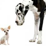 Mali psi, velikog srca! Dobrodošli u njihov svet!