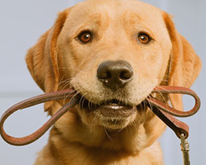 petopedija-nega-odraslog-psa-3