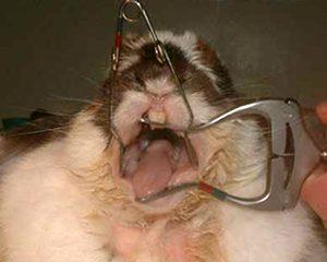 petopedija-nega-zuba-2