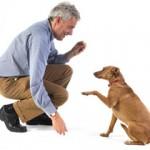 Obuka pasa – Kakva obuka pasa postoji i šta ona podrzumeva?