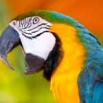 Govor papagaja