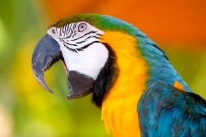 Papagaj se raspričao