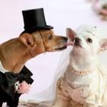 Polna zrelost i razmnožavanje kod pasa