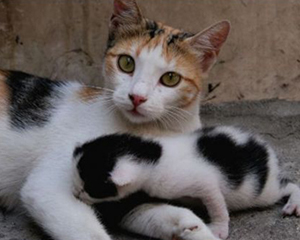 petopedija-porodjaj-macaka-3