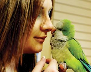 petopedija-pripitomljavanje-papagaja-1