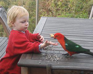 petopedija-pripitomljavanje-papagaja-2