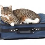 Putovanje sa mačkom
