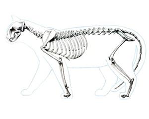 petopedija-rahitis-macaka-3