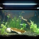Akvarijum i ribice: Da li su akvarijum i ribice u simbiozi?