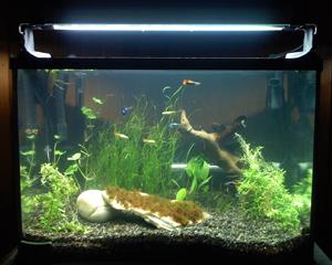 petopedija-slatkovodni-akvarijumi-1