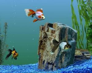 petopedija-slatkovodni-akvarijumi-2