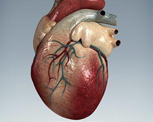 petopedija-srcana-oboljenja-macaka-1