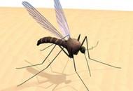 Ujed komarca može biti opasan
