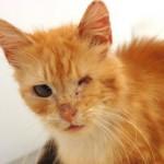 Problem suvog oka kod mačaka
