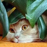 Trovanje sobnim biljkama kod mačaka