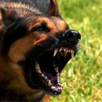 Ujedi pasa: koliko mogu biti opasni ujedi pasa?
