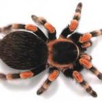 Egzotične životinje za početnike – kako ih čuvati?