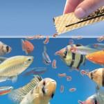 Ishrana akvarijumskih ribica