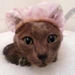 Kupanje mačaka: Kako da kupanje mačaka postane rutina?