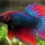 AKVARIJUMSKE RIBE: Kakve sve akvarijumske ribe postoje?