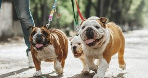 psi na povocu petface