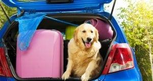putovanje sa psom petface