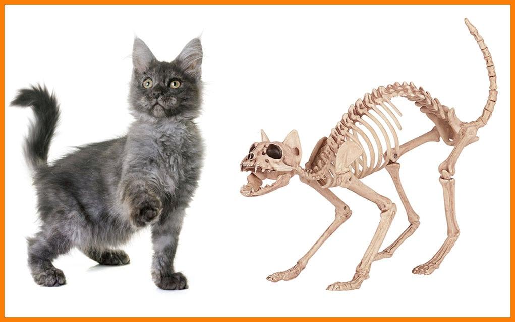 Rahitis kod mačaka