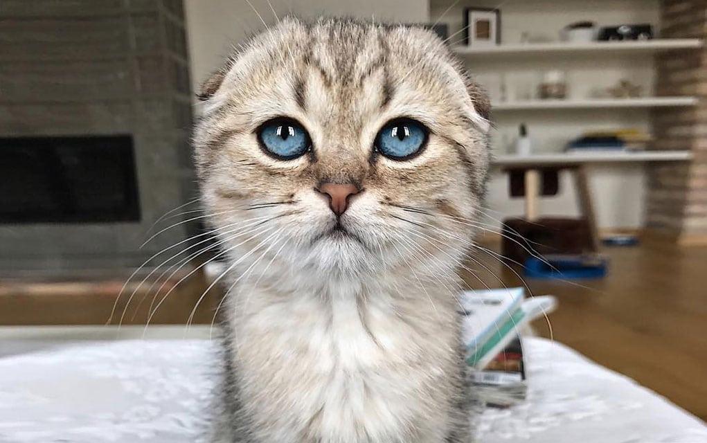 Koupari mačka